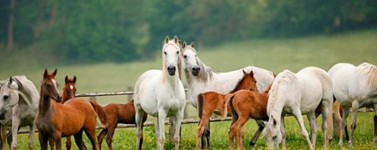 pferde marbach